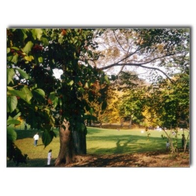 central_park_in_autumn_postcards