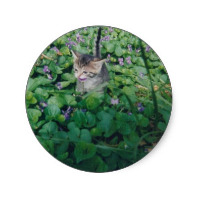 kitten_with_violet_smile_sticker